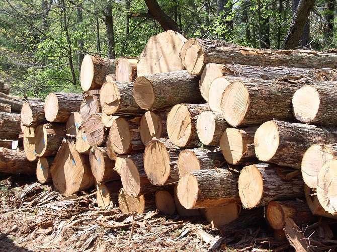 Hasil Ilegal Loging