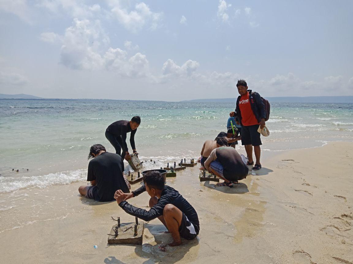Kelompok Sumbawa Grow Up melakukan transpalantasi terumbu karang.