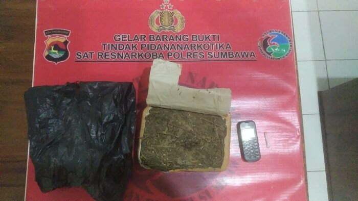 penangkapan ganja di alas Kabar Sumbawa